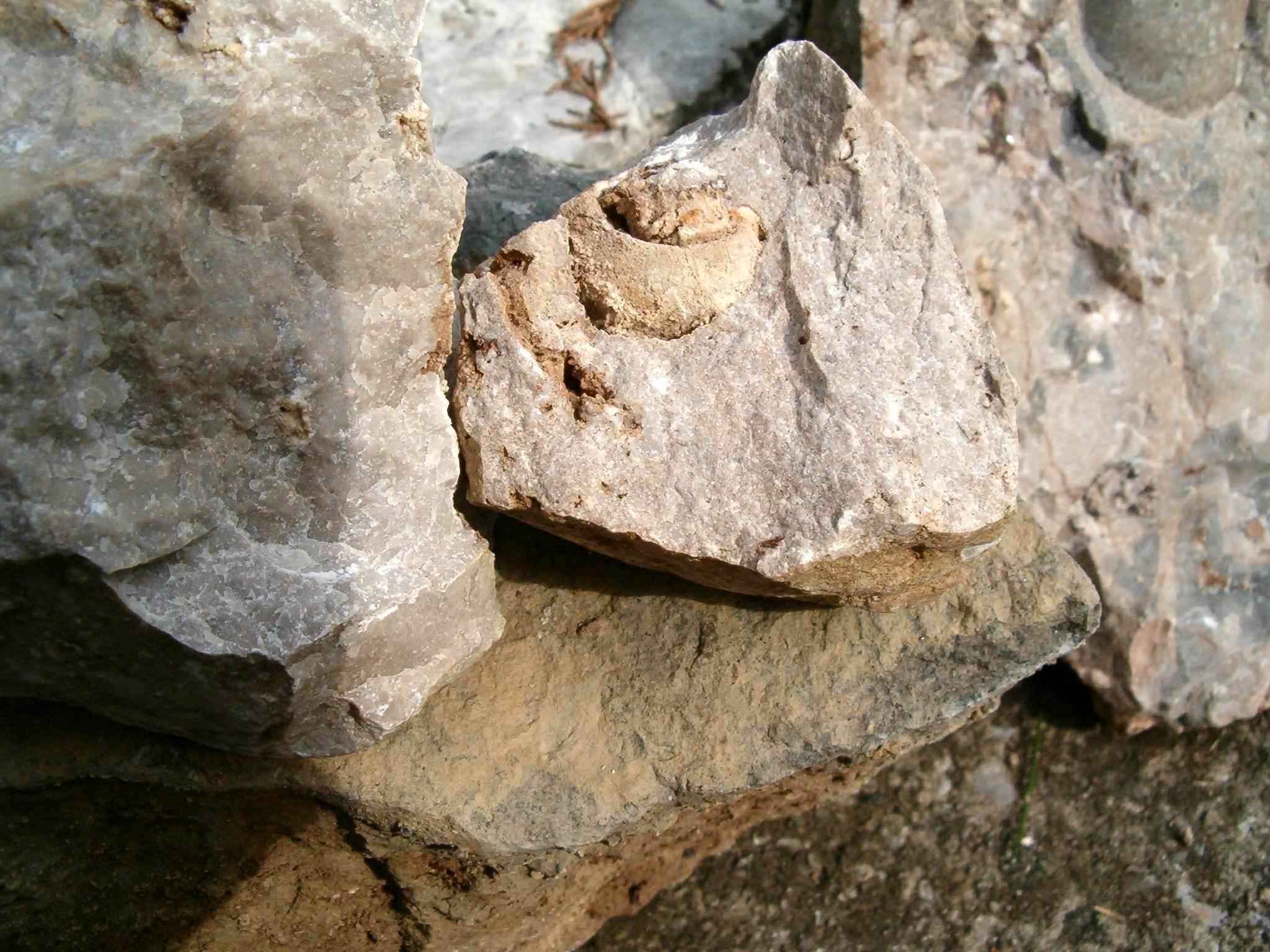 Fossili Esino Lario